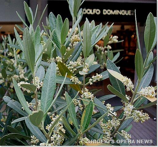 オリーブの花2010