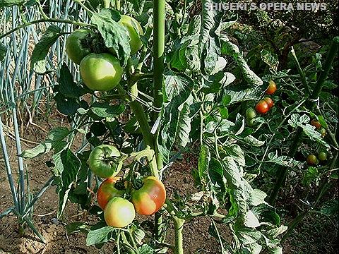菜園2010b