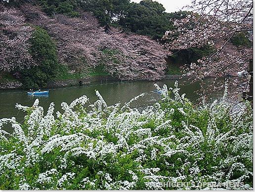 Chidorigafuchi2010a